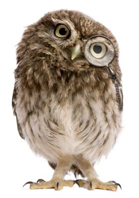 editorial-owl